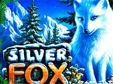 Silver Fox на рабочем зеркале